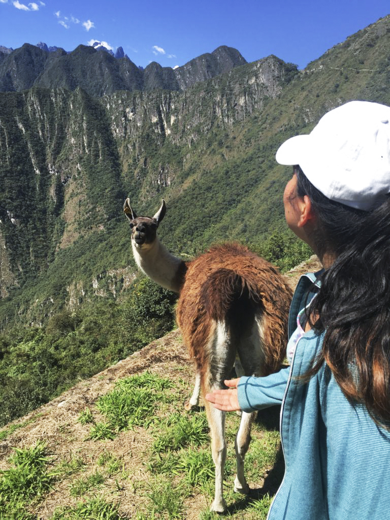 """EXCUSE ME, MISS. DO YOU MIND?!"" - Llama to me"